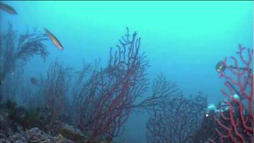 Il corallo del Canale