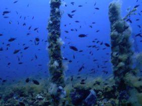Menorca sub – mucillagine sul Malakov