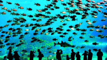 Visitors look at fish in the aquarium in…Visitors look at fish