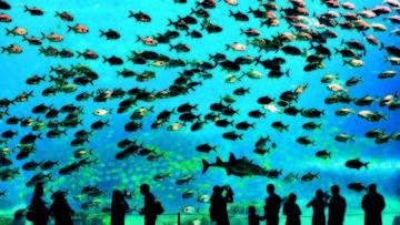 Visitors look at fish in the aquarium in…Visitors look at fish