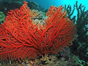 corallo-800×466