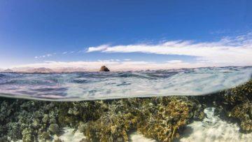 Splitshot di Jackson Reef, Isola di Tiran (Mar Rosso)