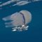 Polmone di mare